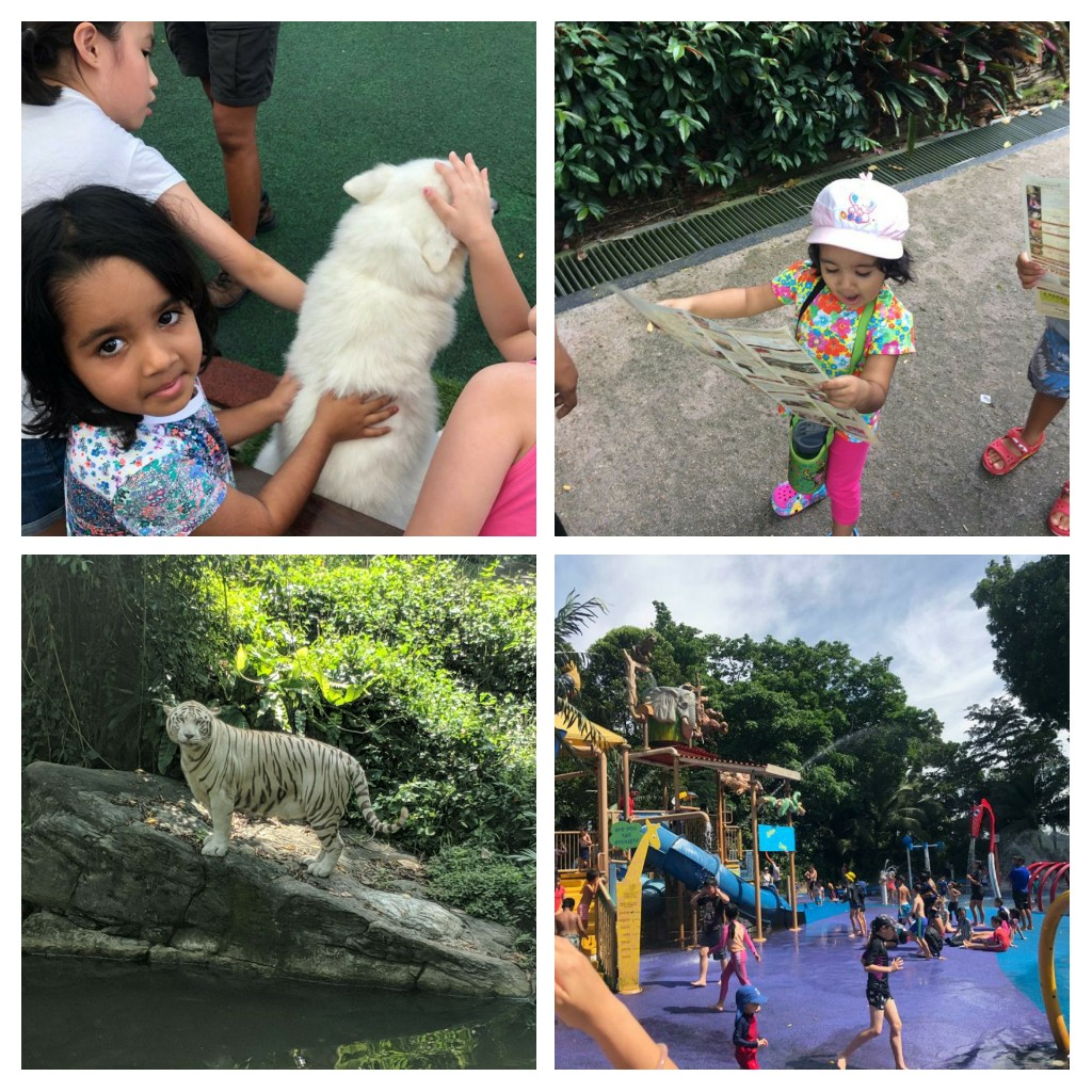 My visit(s) to the Singapore Zoo – Animals, Birds and Much More! #kbcKaadooMonkeyTales